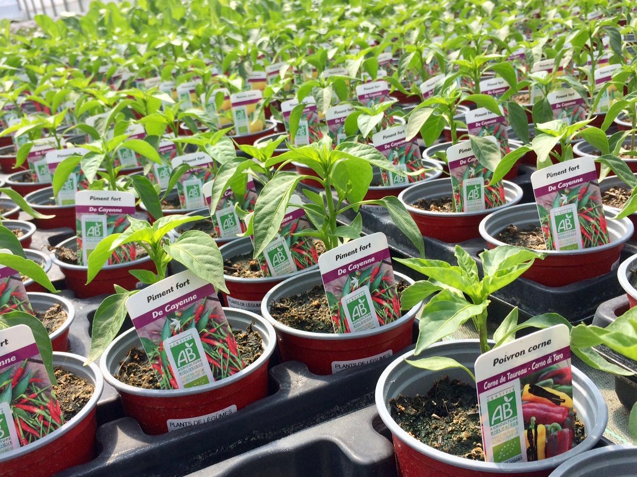 Photos de plants